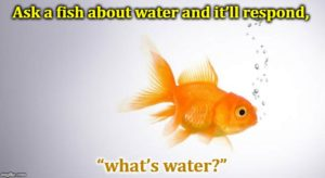 Fish Out Of Water Or In Water